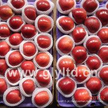 Fresh Red Apple 2014 Nova Colheita