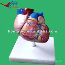 Modelo de anatomia do coração do estilo novo da vida do estilo de ISO, modelo do coração humano