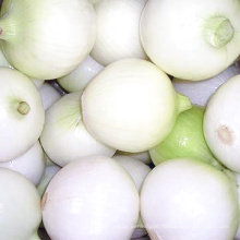 Fresh Onion (Yellow onion and red onion)