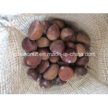 2015 Crop Fresh Каштан