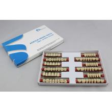 SA21 zweischichtige Acrylharzzähne