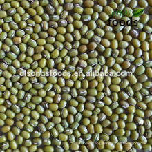 Green Mung Bean Export