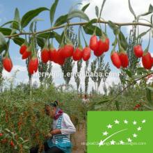 EU Certificate Organic Goji Berries Factory Supply