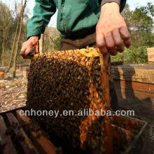 Природа мультифлора пчелиный мед