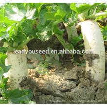 МР13 Huyu белая гибрид F1 редиса семена для посадки