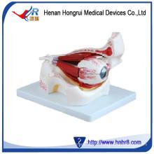 Eye with Orbit HR-316B