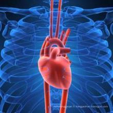 Entretien de la taurine du système cardiaque