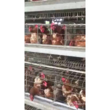 High quality cheap price chicken cage/egg chicken for Kenya farm for sale