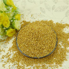 High purity Yellow Millet in Husk on hot sale