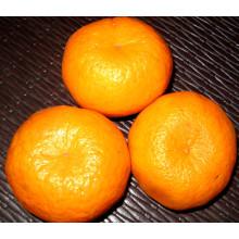 Professional Supplier Fresh Mandarin Orange (50-54mm)