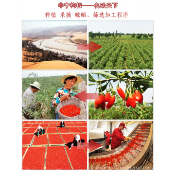 Ningxia Wolfberry Frucht