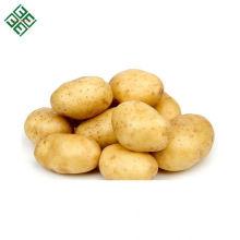 New Corps frische Kartoffel für Chips mit gutem Preis