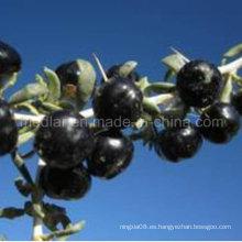 Residuos no pesticidas de nísperos Black Wolfberry