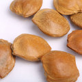 Delicious and Healthy Apricot Pit For Sale