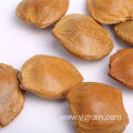 Wholesale Agriculture Products apricot pit natural nuts