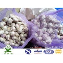 Tamanho pequeno 4,5 centímetros de alho branco normal 20 kg embalagem saco de malha