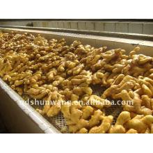 2012, récolte, haute qualité, frais, chinois, gingembre, racine