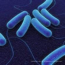 Probiotisch für Tierfutter
