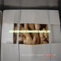 Chinese Fresh Ginger New Crop