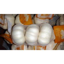 Alho chinês branco puro fresco (5,0 CM, 5,5 CM E UP)