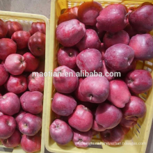 Свежие Яблоки Huaniu