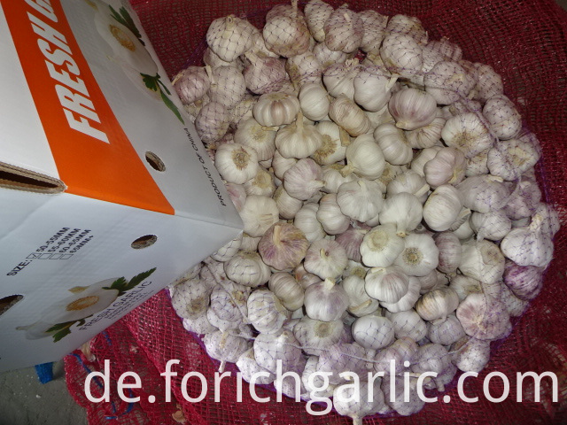 Export Fresh Garlic