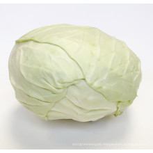 2021 New Season Fresh Vegetable Exporter With International Certificationss Fresh Chinese Round And Flat Cabbage