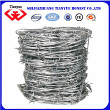 Electro Galvanized Barbed Wire (TYB-0020)
