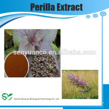 Chinese Herbal Extract Perilla Herb Extract