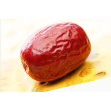 Rapid Big Red Jujube