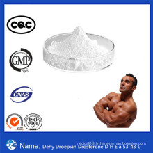 Muscle Building Anabolic Steroid Hormones Dehydroisoandrosterone DHE a
