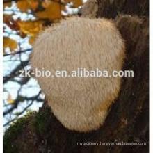 Nature and Organic Hericium erinaceus Extract Poweder /Monkey Head Mushroom Extract