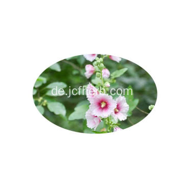Althaea Officinalis Eibischwurzelextrakt
