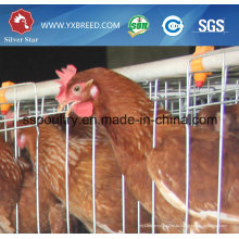 Завод розетки супер сильный и прочный курица клетка
