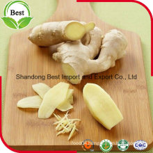 Chinese Fresh Ginger with Cheap Price and High Quality