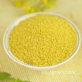 Gran valor nutricional de grano de mijo amarillo de alta calidad