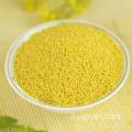 Grano di miglio giallo di alta qualità ad alto valore nutritivo