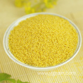 High quality yellow millet grain high nutrition value