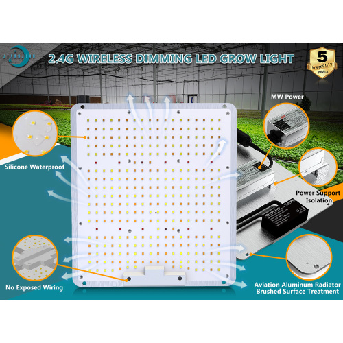 Reguläre LED Grow Light 100W Hersteller