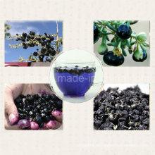 Medlar BCS-Zertifikat Organische schwarze Goji-Beere