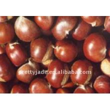 Low price chinese fresh chestnut
