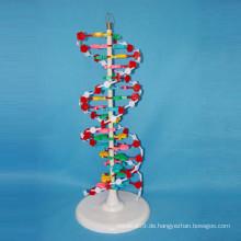 Hochqualitative medizinische Forschung DNA vergrössertes Modell Schulangebot