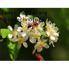 natural linden honey