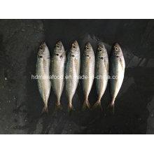 Nuevo pescado de tierra congelado ronda Scad