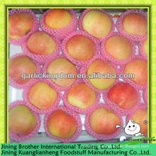 China fábrica de manzanas de gala roja