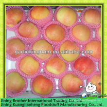 Fábrica de maçã vermelha com preço baixo
