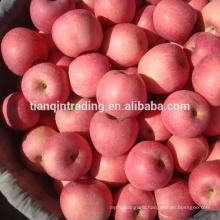 fresh China Fuji apple of Shannxi origin