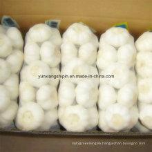New Crop White Garlic, Fresh Garlic