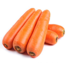 New crop Chinese carrot for wholesale top grade red natural carrots