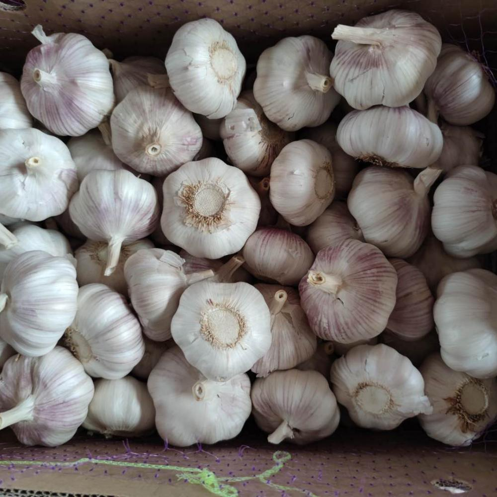 Cold Room Fresh Garlic